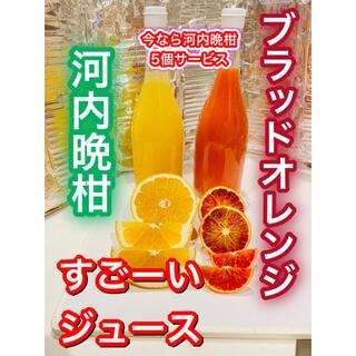 宇和島産 ブラッドオレンジジュース 河内晩柑ジュース 河内晩柑のおまけ付き(フルーツ)