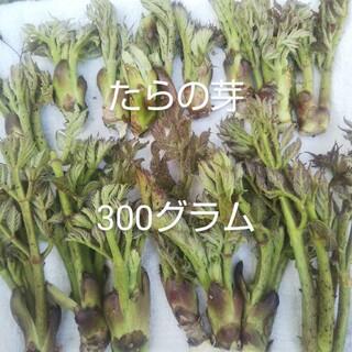 天然 タラノメ たらのめ タラの芽 たらの芽(野菜)