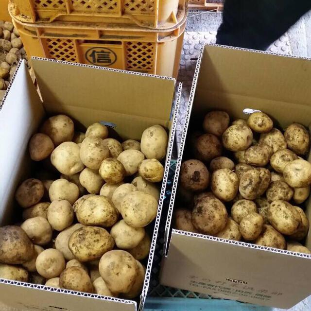 新じゃがいも 長崎県産5kg 食品/飲料/酒の食品(野菜)の商品写真