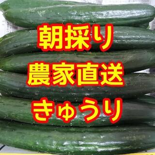 訳あり 無加温きゅうり(野菜)