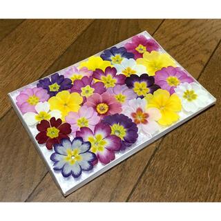 21  銀の紫陽花が作ったふんわり可愛いプリムラのドライフラワー(ドライフラワー)