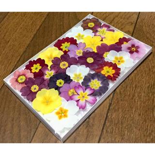 22  銀の紫陽花が作ったふんわり可愛いプリムラのドライフラワー(ドライフラワー)