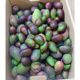 沖縄本島産 今季初物 摘みたて青マンゴー3Kg♪(フルーツ)