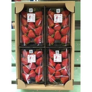 完熟朝摘みイチゴ 紅ほっぺ 中粒4パック入り(フルーツ)