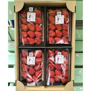 完熟朝摘みイチゴ 紅ほっぺ 4パック入り(フルーツ)