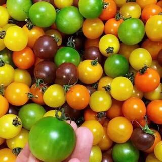 カラーミニトマト詰め合わせ3kg