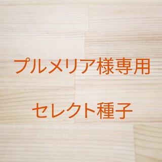 プルメリア様専用 セレクト種子 10袋(野菜)