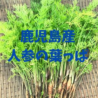 鹿児島産 人参の葉 にんじんの葉っぱ(野菜)