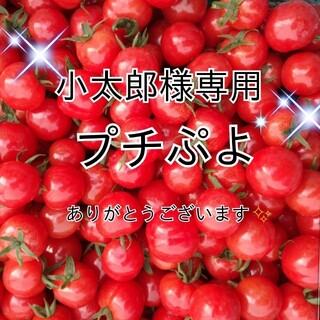 小太郎様専用✾プチぷよ2kgパック✩035(野菜)