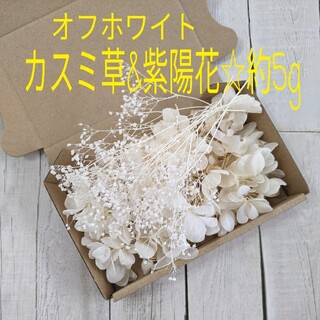 オフホワイト☆カスミ草&紫陽花☆約5g(プリザーブドフラワー)