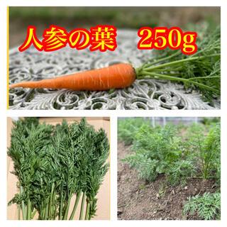 人参の葉 250G 人参の葉っぱ 無農薬野菜 ペットの餌 ウサギの餌(野菜)