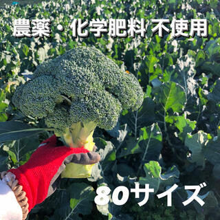 クール便 無農薬 ブロッコリー 80サイズ(野菜)