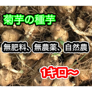 【1キロ〜】菊芋 種芋  無農薬 無肥料 自然農 種 苗 オーガニック 自然栽培(野菜)