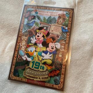 19周年 ポストカード ディズニー トレイル ミッキー(写真/ポストカード)