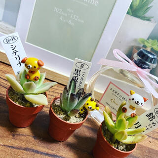 多肉植物deco(♥Ü♥)(その他)