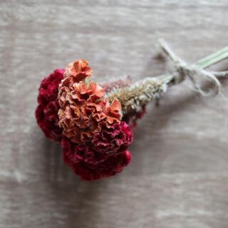 ドライフラワー 花材 H104(ドライフラワー)
