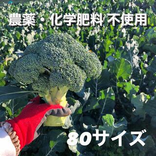 クール便 無農薬 ブロッコリー 80サイズ