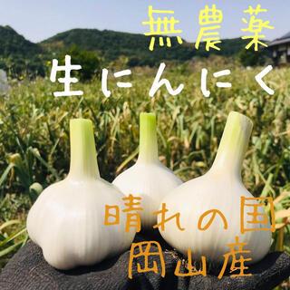 ★【無農薬】生ニンニク1kg「倉敷ホワイト」岡山産にんにく サイズ混合 新鮮野菜