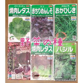 野菜の種セット 6種類(その他)