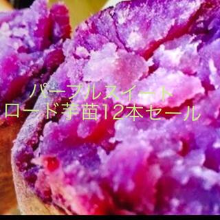 パープルスイートロード芋苗12本(野菜)