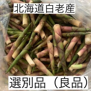 【予約・確認用】北海道白老産天然 姫竹 根曲がり竹  500g〜(野菜)