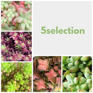 多肉植物 *  5selection  *(その他)
