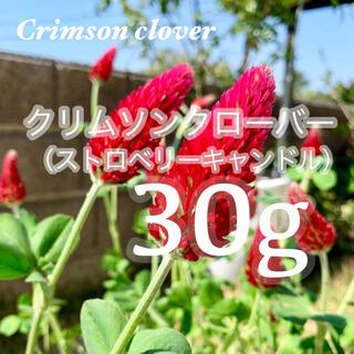 【最安値!説明書付き】30g9000粒クリムソンクローバー、クリムゾンクローバー(その他)