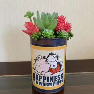 多肉ジャンクブリキ缶*お昼寝(その他)