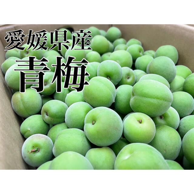 愛媛県産 採れたて新鮮【青梅】梅のみ5kg! 食品/飲料/酒の食品(フルーツ)の商品写真