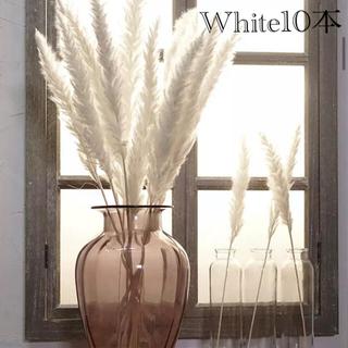 パンパスグラス ホワイト 10本セット(ドライフラワー)