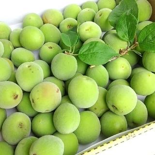 【完全農薬不使用♪庭の梅】青梅  約1キロ(フルーツ)