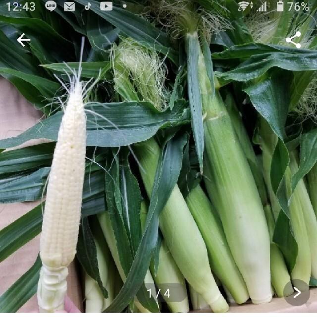 🌽🌽朝採り発送ヤングコーン50本以上🌽🌽 食品/飲料/酒の食品(野菜)の商品写真