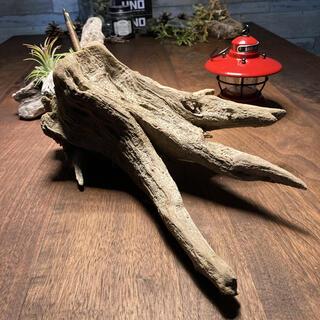 個性的カッコいい流木…天然物 インテリア オブジェ(彫刻/オブジェ)