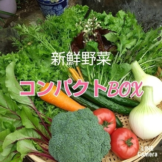 新鮮野菜【畑〜直送便♪コンパクトBOX】農薬不使用