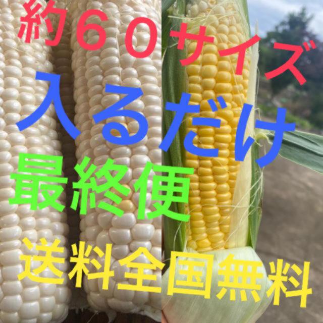 yutachan様専用品 食品/飲料/酒の食品(野菜)の商品写真
