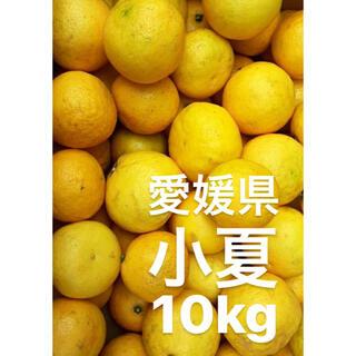 愛媛県 小夏 10kg(フルーツ)