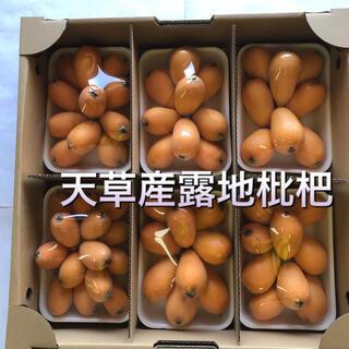 熊本県天草市五和町でとれた露地枇杷