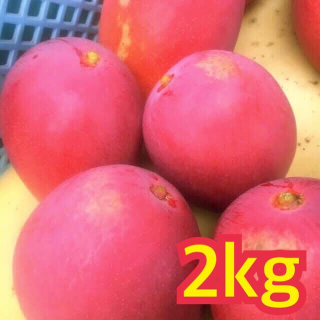 宮崎県産 完熟マンゴー 自家用 2kg 食品/飲料/酒の食品(フルーツ)の商品写真