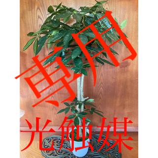 光触媒 人工観葉植物 ウォールグリーン 造花 インテリア パキラ12064