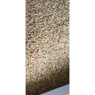 福井県越前大野産 コシヒカリ 玄米30kg(米/穀物)