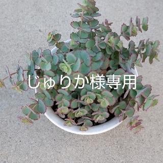 じゅりか様専用ページ(その他)
