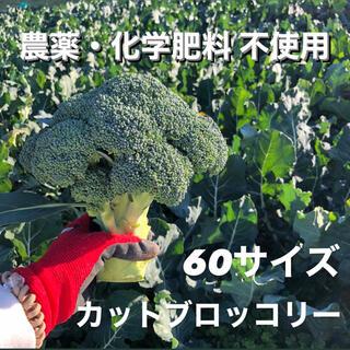 無農薬 カットブロッコリー 60サイズ