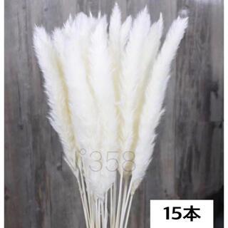 ※スプレー・乾燥済※ホワイトパンパスグラス15本ハンドメイドスワッグ花材北欧韓国(ドライフラワー)
