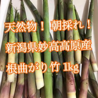 天然物! 予約注文分です。 新潟県妙高高原産 根曲り竹 1キロセット