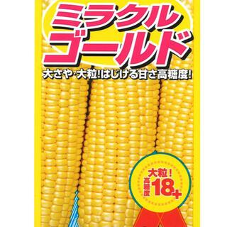 甘いトウモロコシ ミラクルゴールド種子 1袋全部 新品(その他)