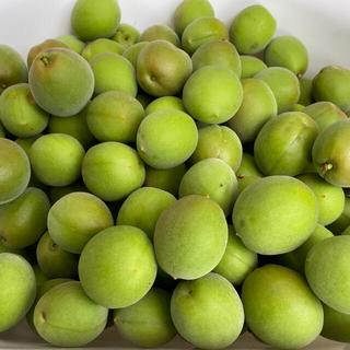 島根県産 梅の実 約6kg  無農薬 自然栽培