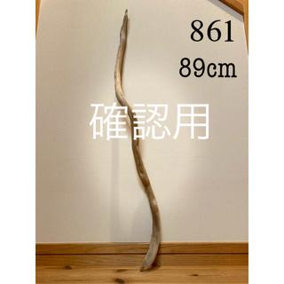 流木【861】