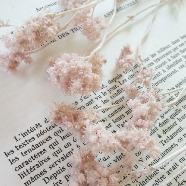 クリスパム   ピンクベージュ 5本 ハンドメイドのフラワー/ガーデン(ドライフラワー)の商品写真