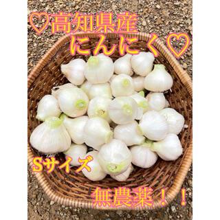【無農薬】 無農薬 にんにく 国産 高知県産 にんにく ニンニク 1キロ S