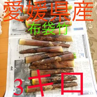 愛媛県産 布袋竹 たけのこ